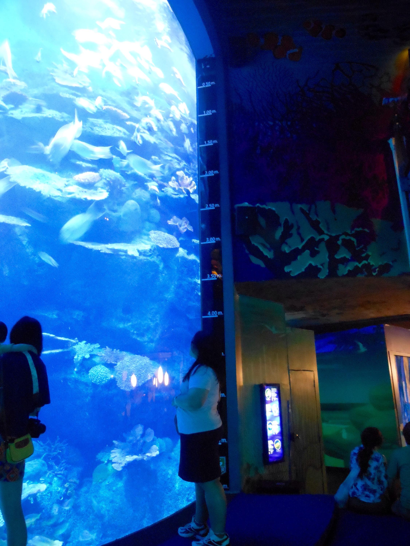 Pengalaman The Purnamas Tiket Combo Madame Tussauds Sea Life Bangkok Ocean World Anak Ada Petunjuk Kedalaman Di Dindingnya Anyway Habis Dari Langsung Pergi Ke Museum Tussaud